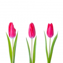 Voorjaarsconcert met Rejoice in tulpenland